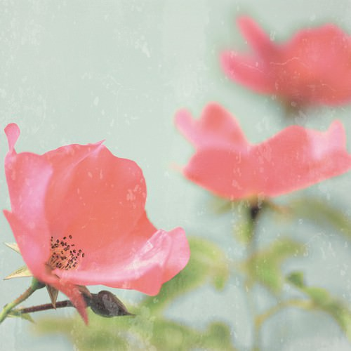 Botanical Romance von Tom Lambert