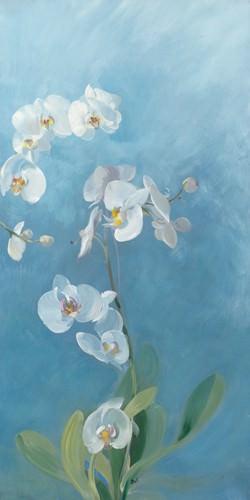 Phalaenopsis Fontaine III von Sylvie Vernageau