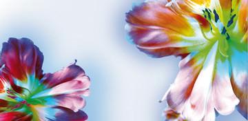 Blütenfantasie I von Frauke Meszaros