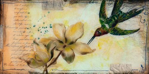 Helleborus von Sabine Gotzes