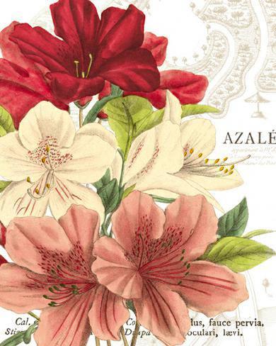 Azalee Jardin II von Wild Apple Portfolio
