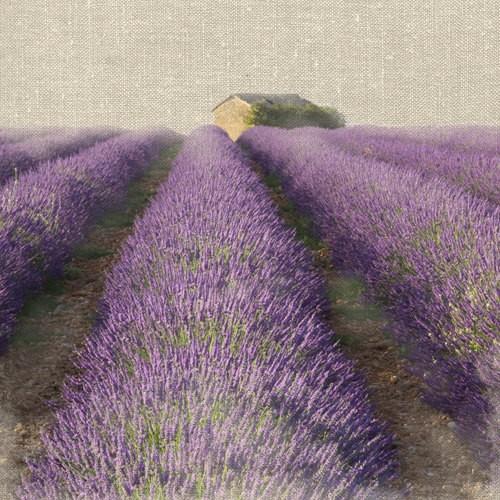 Lavender Field von Bret Straehling