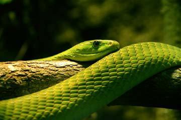Grüne Schlange II von Bernhard Böser
