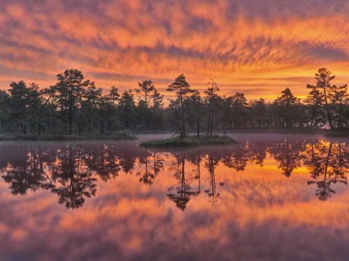 Dawn von Hans Strand
