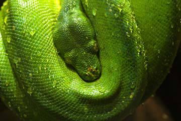 Grüne Schlange I von Bernhard Böser