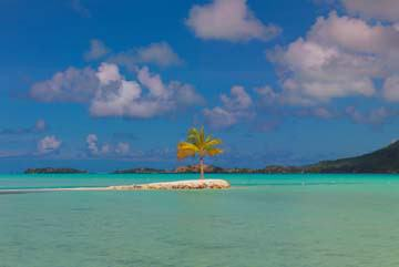 Bora Bora Lone Palm von John Xiong