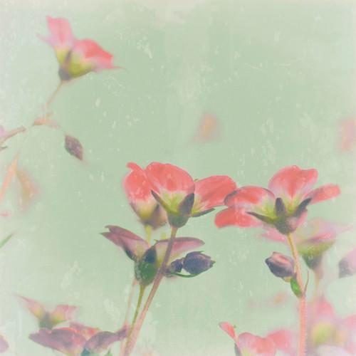 Romantic Meadow von Tom Lambert