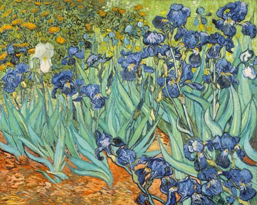 Iris von Vincent van Gogh