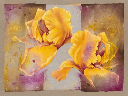 Iris von Virginie Cadoret