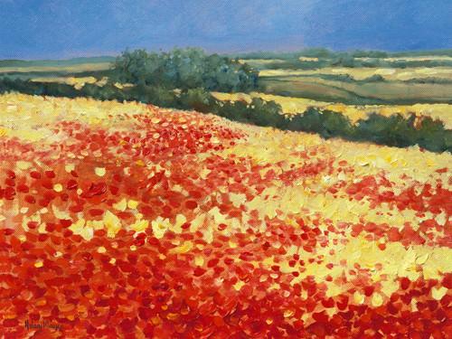 Harvest Poppies von Hilary Mayes