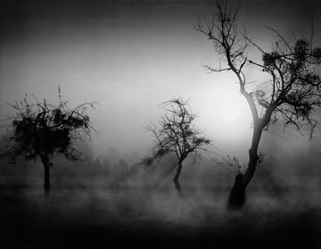 Bäume im Nebel II von Tom Weber