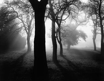 Bäume im Nebel I von Tom Weber