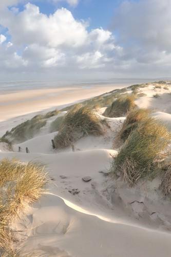 Les dunes - pastel von Georges-Felix Cohen