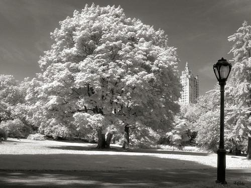Central Park Tree von Ralf Uicker