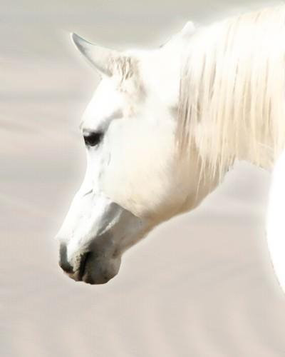 Pegasus II von Kari Brooks