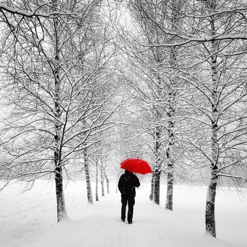 Der einsame Weg von Uwe Steger