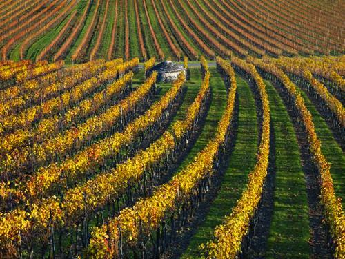 Veineyards of hautes cetes Burgundy von Hans Strand