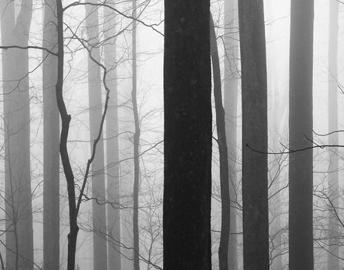 Forest Code von Nicholas Bell