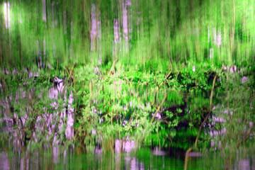 Amazonas I von Rolf Möller