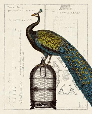 Peacock Birdcage II von Sue Schlabach