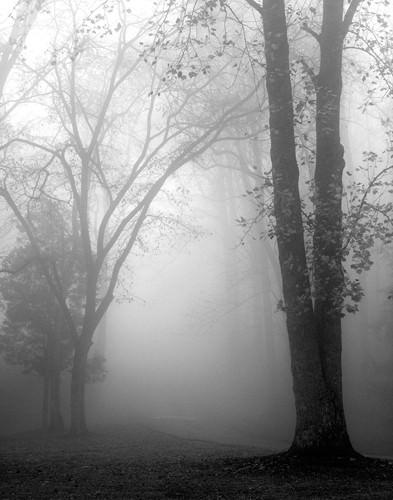 November Fog von Nicholas Bell