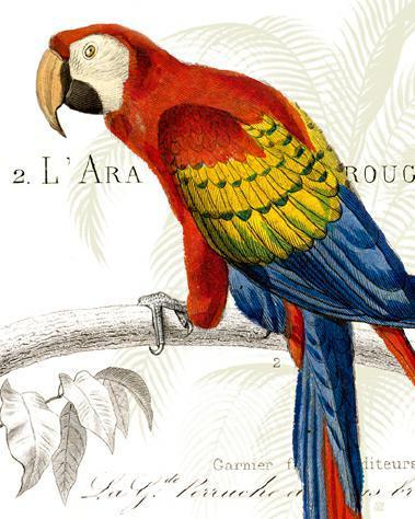 Parrot Botanique II von Wild Apple Portfolio