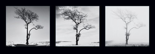 Lone Trees von Dave Butcher