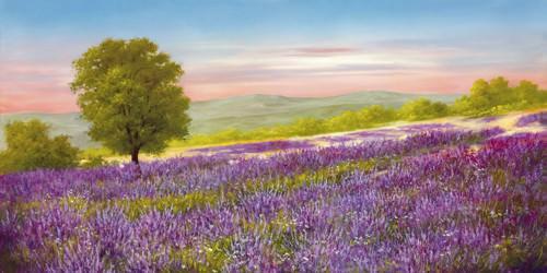 Lavender Field von Heinz Schellnhammer