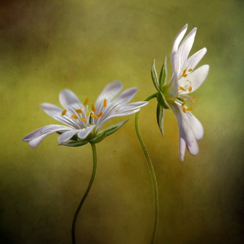 Echo von Mandy Disher
