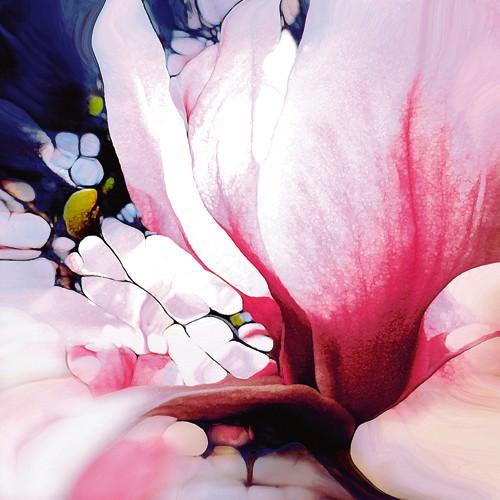 Magnolie von Renate M. Schmidt