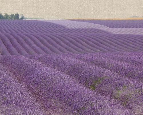 Lavender on Linen 1 von Bret Straehling