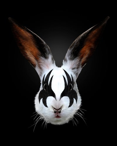Rabbit Rocks von Robert Farkas