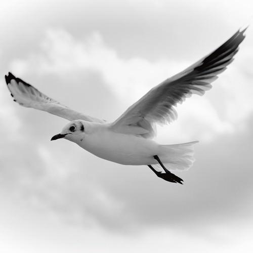 Fly Away von Uwe Steger