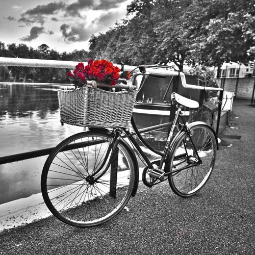 Romantic Roses I von Assaf Frank