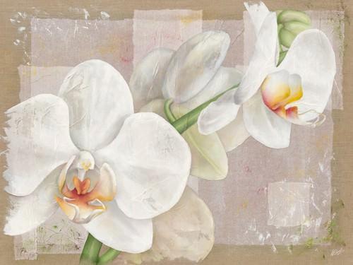 Orchidee von Virginie Cadoret