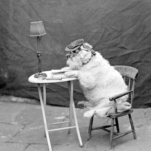 Chum (reading dog) von Anonym