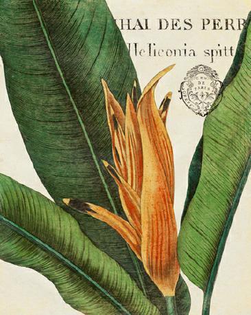 Botanique Tropicale II von Wild Apple Portfolio