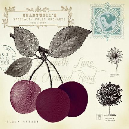 Cherry Notes von Studio Mosseau