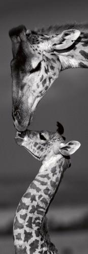 Masai mara Giraffes von Marilyn Parver