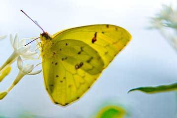 Butterfly Beauties I von Florian Dürmer