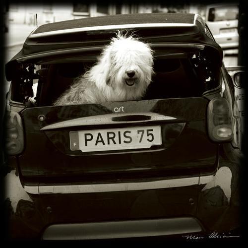 Paris Dog I von Marc Olivier