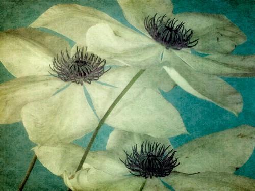 Klema von Dawn Leblanc