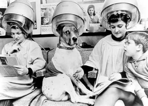 Dog at the Hairdressers von Anonym