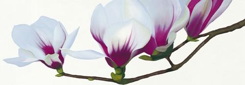 Magnolia von Stephanie Andrew