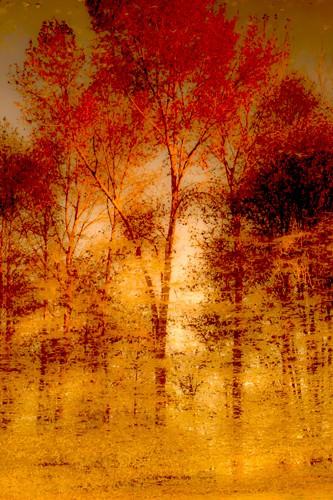 Autumnal Grunge von Norm Stelfox