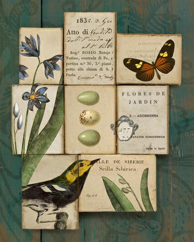 Birds and Butterflies I von Sue Schlabach