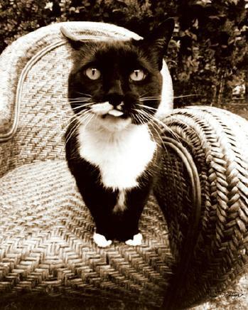 Kitty I von Jim Dratfield