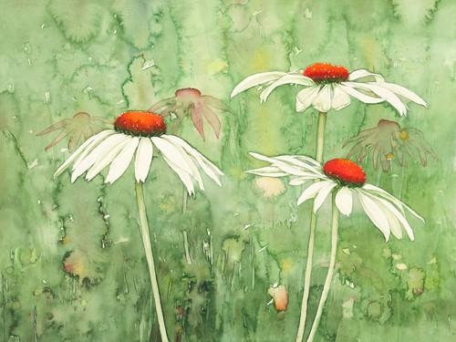 Echinacea two von Clema