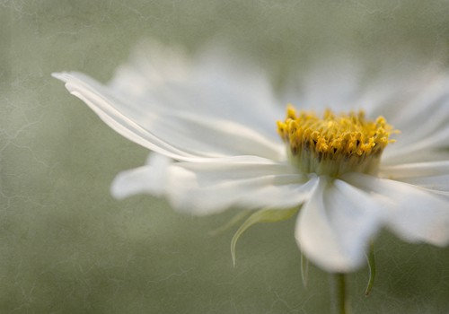 Whisper von Mandy Disher