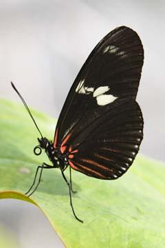 Butterfly Beauties IV von Florian Dürmer